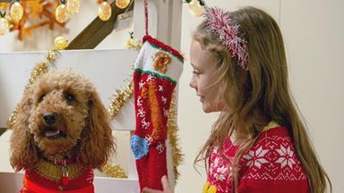 Wuffel, Der Wunderhund - Wuffel, Der Wunderhund: Der Weihnachtskäsekuchen