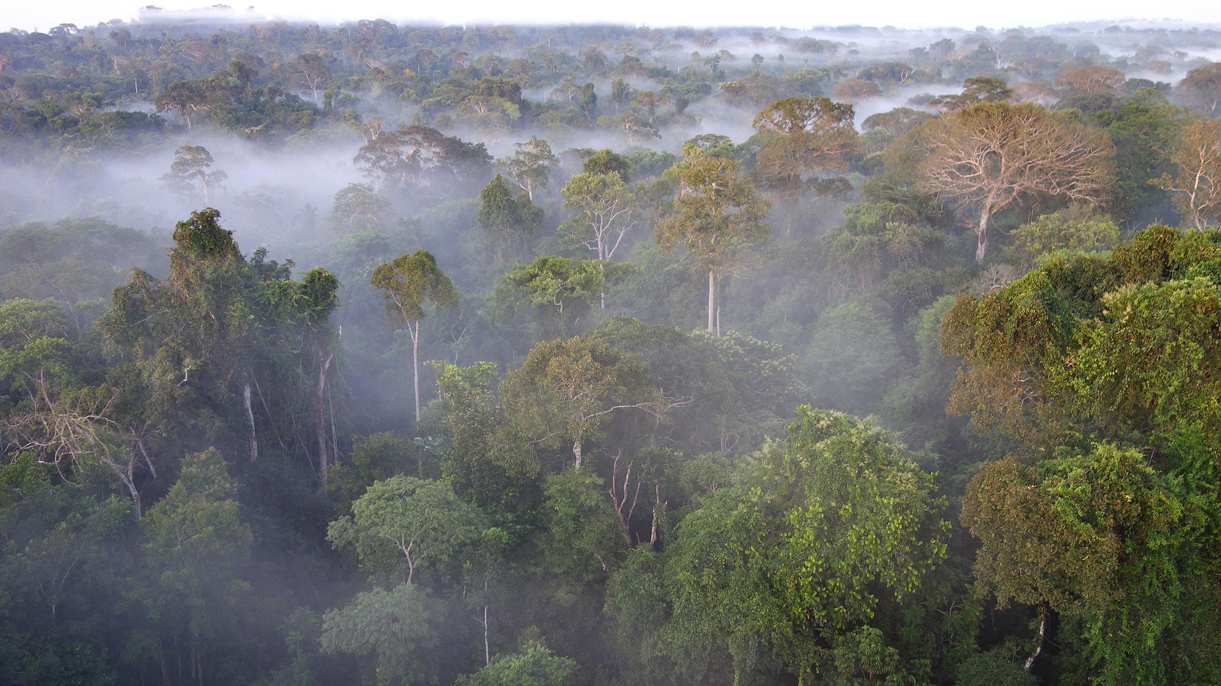 """Der Amazonas Regenwald, die """"Grüne Lunge"""" des Planeten und für einige Wissenschaftler der entscheidende Motor im weltweiten CO2- und Wasserhaushalt."""