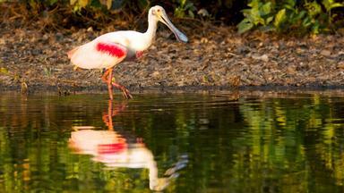 Zdfinfo - Wildes Pantanal: Am Letzten Wasserloch