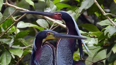 Zdfinfo - Wildes Zentralamerika: In Den Hügeln Costa Ricas