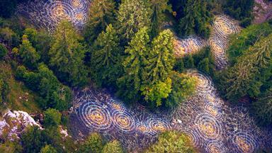 Terra X Dokumentationen Und Kurzclips - Unsere Wälder (1/3): Die Sprache Der Bäume