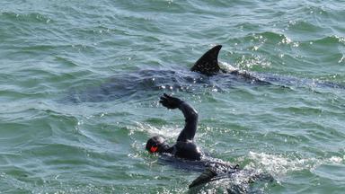Zdfinfo - Wunder Der Wissenschaft: Feuer-wasserfall Und Leuchtende Haie