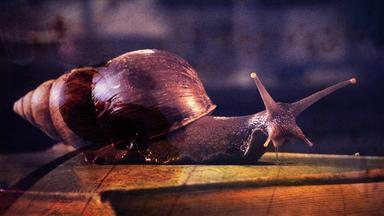 Zdfinfo - Wunder Der Wissenschaft: Schleimige Invasion Und Leuchtendes Moos