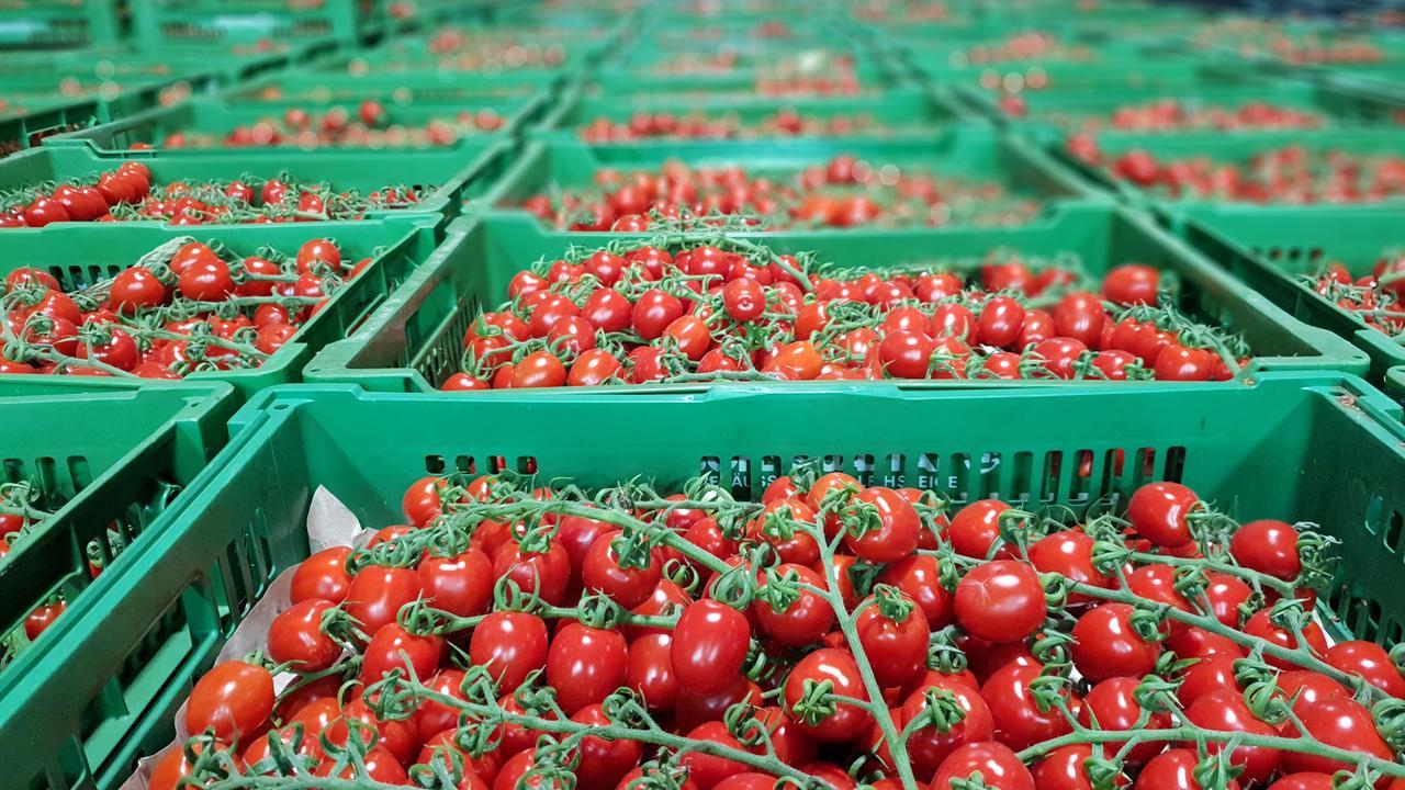 Regionalität hat Grenzen: Auch bayerische Tomaten wachsen auf Kokosmatten aus Sri Lanka.